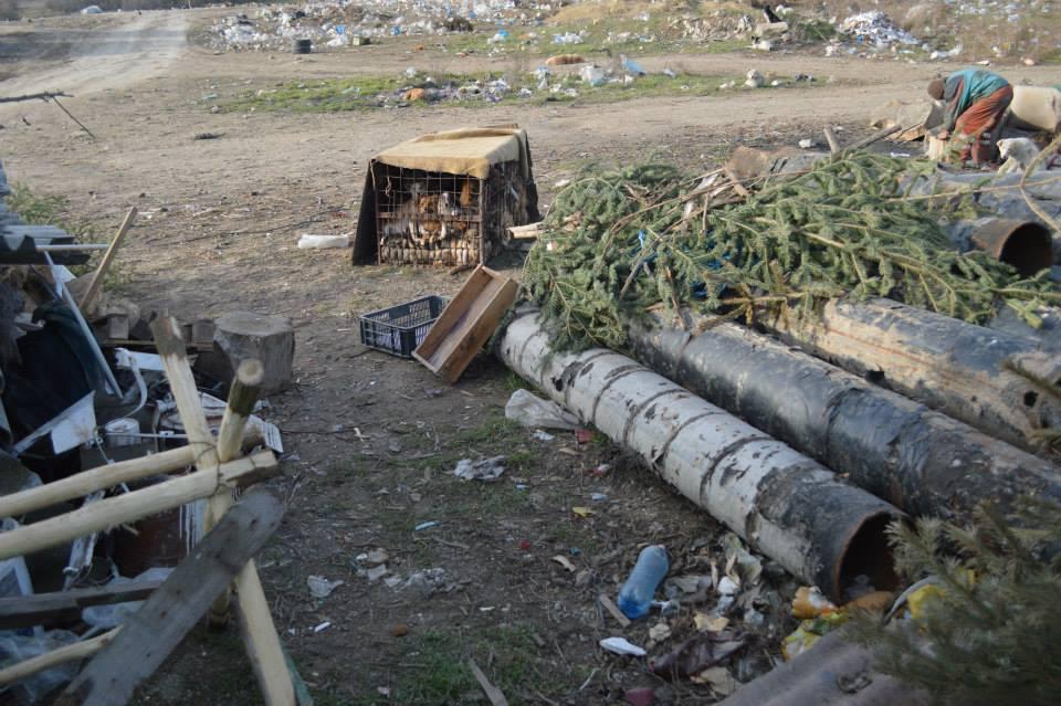 Harsova shelter2
